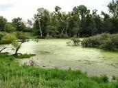 ¿Cual es el estado del humedal Cordoba?