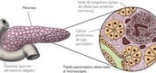 Glandulas mixtas