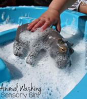 Animal Washing
