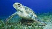 (-: Trash-Free Turtles :-)