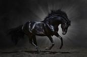 N.M.S. Stallions
