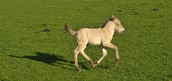 Look at the pony running.