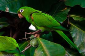 Puerto Rico's Animals