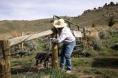 repairing fenes