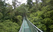 Bridges help to keep tourists out of animal habitats