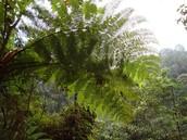 Parque ecológico la Romera