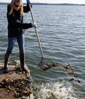 Attempting to Replenish Oyster Populations