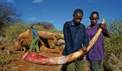 This is a glimpse of what poaching looks like