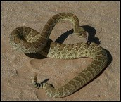 This is a snake