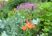 Immediate Programs For permaculture design