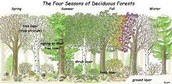 seasons of deciduous forest