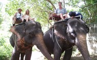 Riding elephants in Koh Samui