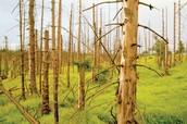 Trees losses their leaves