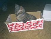 My New Cat