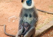 Monkeys early life