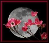 FULL FLOWER MOON HIKE –------------ Saturday. May 21, 7:30 pm