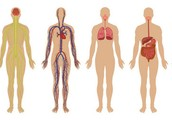 What body system(s) are affected by leukemia?