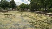 Millcreek pond