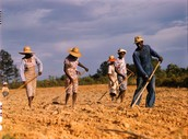 Sharecropping (Positive/Economic)