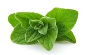 An Oregano Leaf