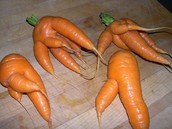 Mutated carrots