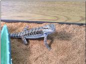 Eragon is getting bigger!