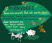 From bees to elephants, we cater to all herbivores!
