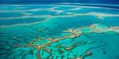 Scribble Reef