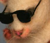 Mouse 3 (Ben)