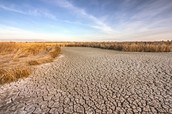 Drought effects on organisim and enviornment