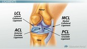 Example in the Knee - Cartilage