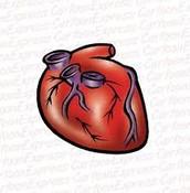 La coeur