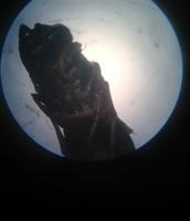 Bald Faced Hornet Larvae