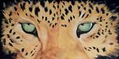 The innaugural Jaguar Dash is coming!!