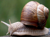 The Ugly Old Snail