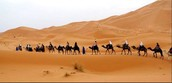 Three things you need to know about Sahara Desert