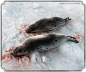 9. A study conducted in 2001 reported that over 42% seals were skinned while they were alive and conscious