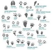 Footprints tell a story