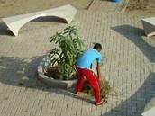 Planta un Árbol.