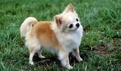 Bark bark I'm cute