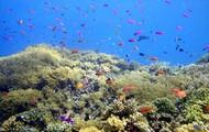 Saltwater Ecosystem