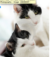 Pepper and Salt Cats!!!!!!!!!!!!!!