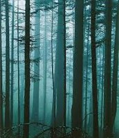 Balsam Spruce Forest