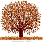 Fall Showcase