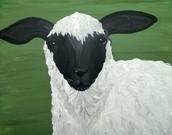 Farm Animal Series; Sheepish Grin