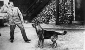 Hitler throws a stick for Blondi.