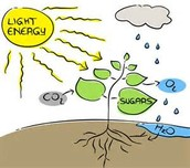 Our photosynthesis plan