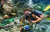 You can go scuba diving