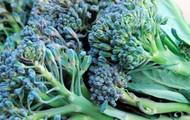 Seasonal Certified Organic Produce