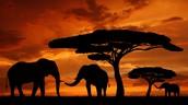 Savanna Desert in Africa
